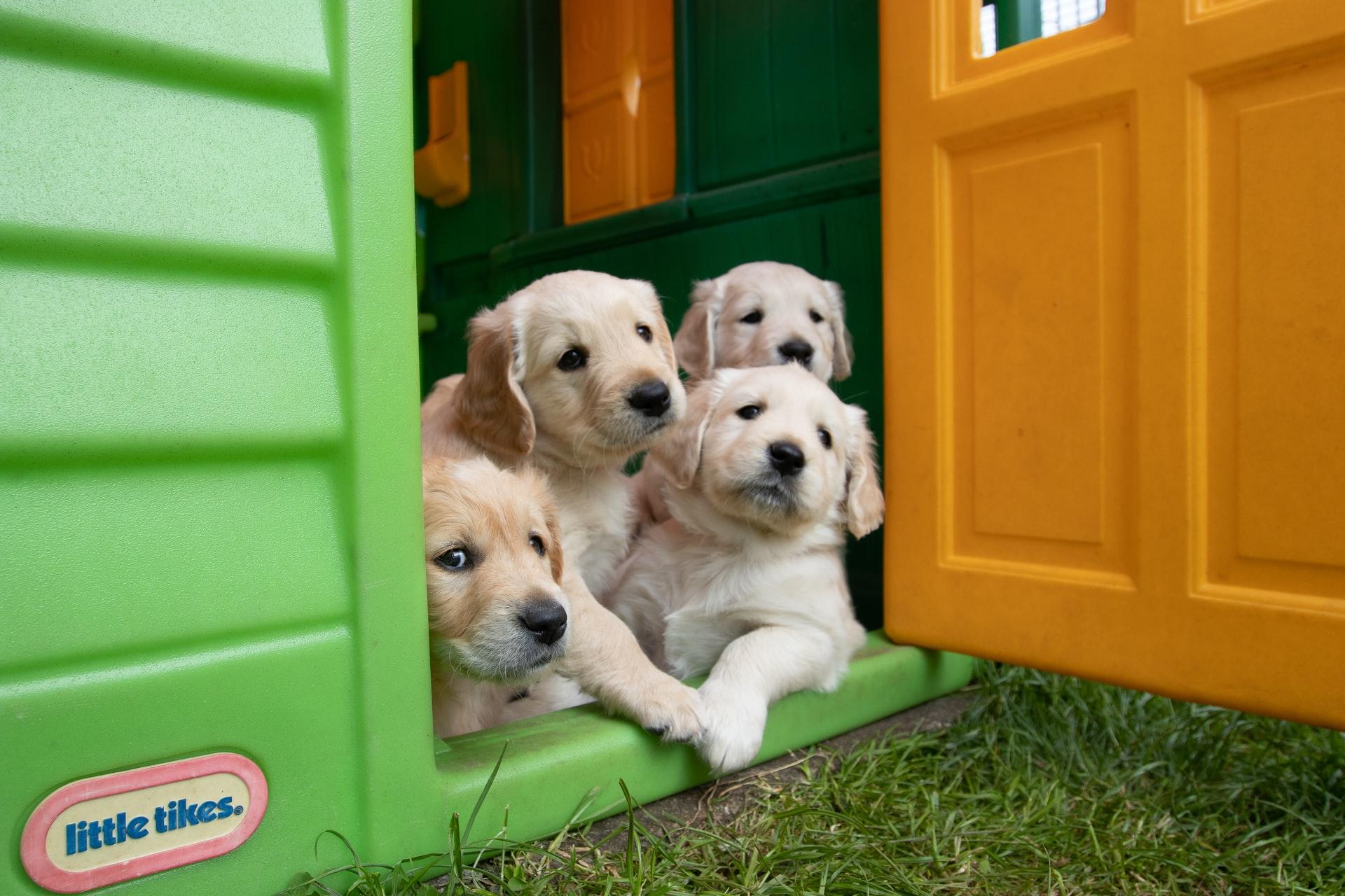 6 Things To Learn in Puppy Preschool